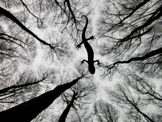 fall wildlife photography by edwin giesbers