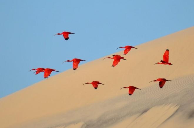 13-pop-color-wildlife-photography-by-jonathan-jagot
