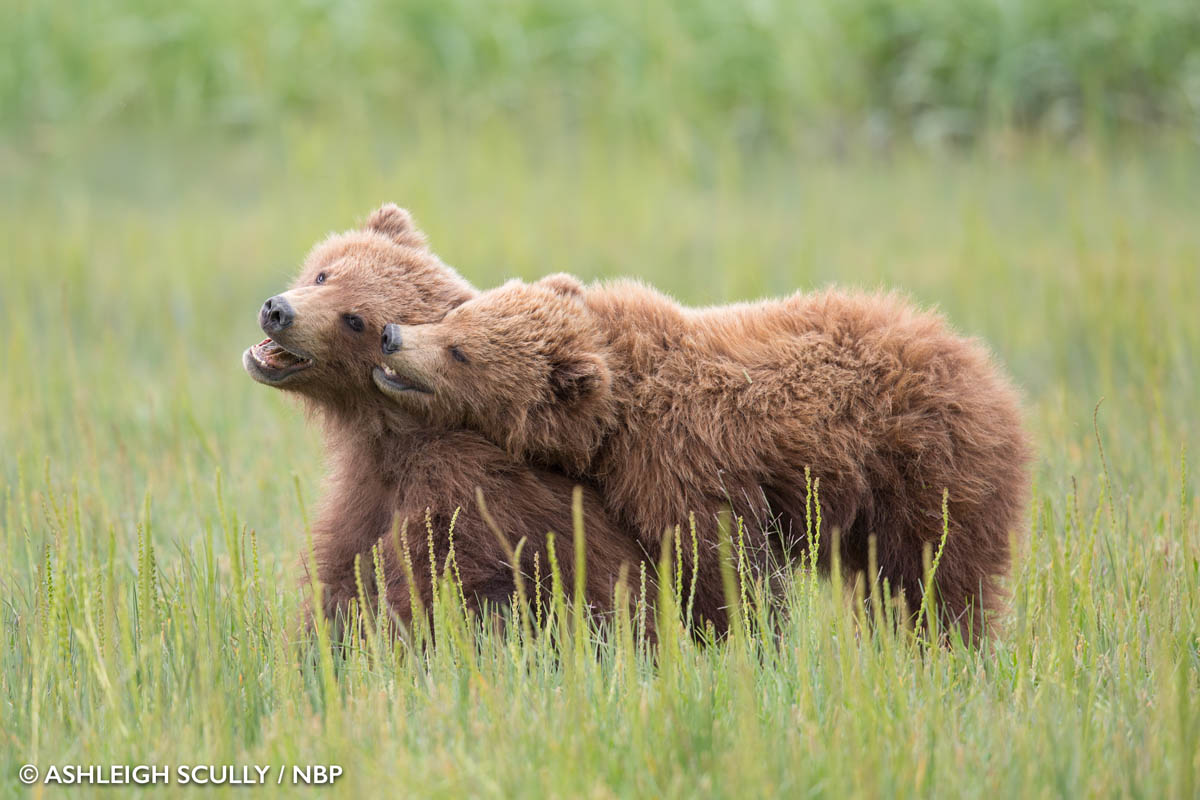 2-young-bears-windland-awards-photography-by-ashleigh-scully