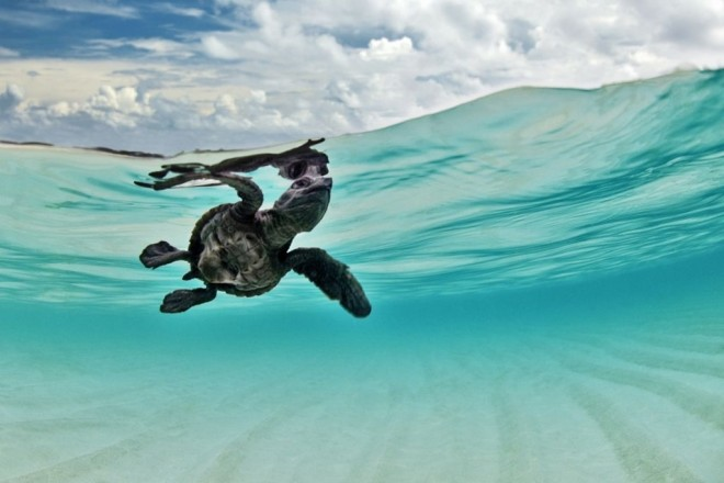 4-underwater-photography-by-sumer-verma