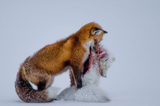 hunger wildlife photography by don gutoski