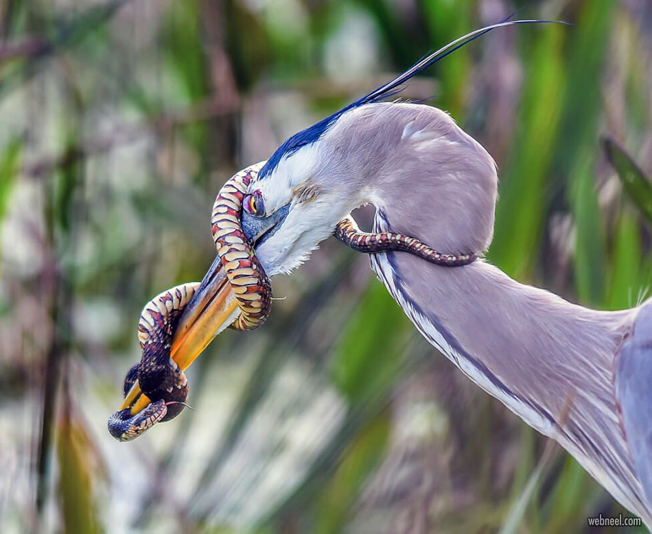 best wildlife snake photography by patricktewey