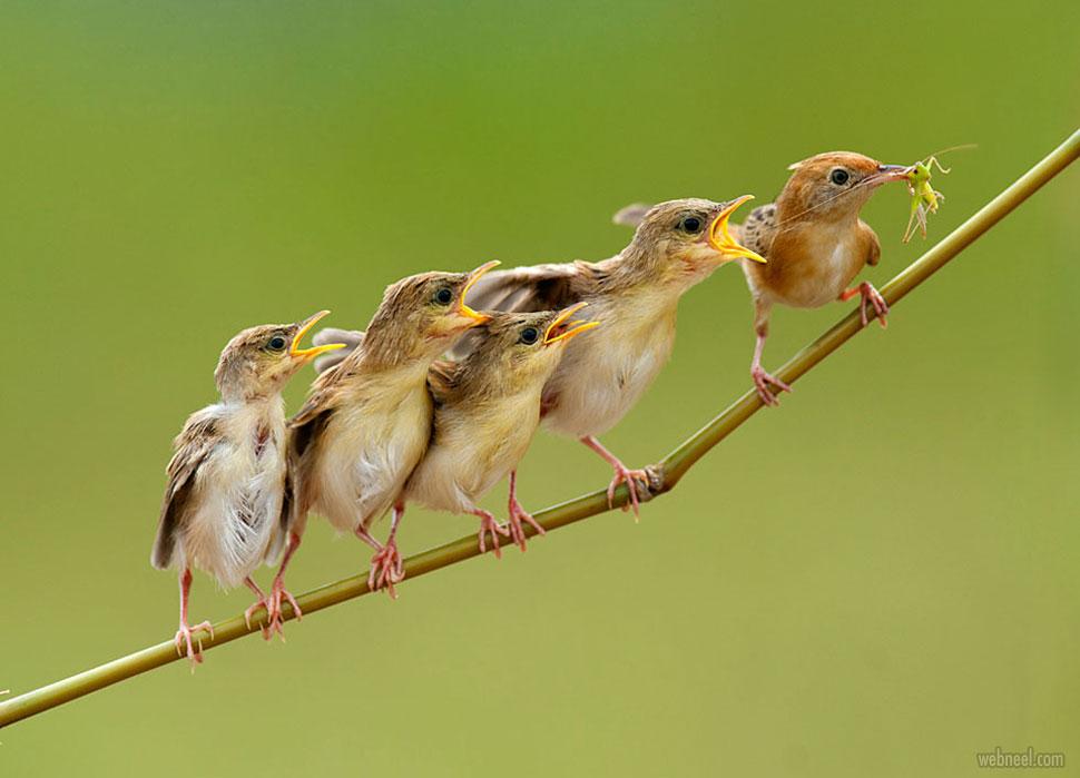 bird photography by iwan tirtha