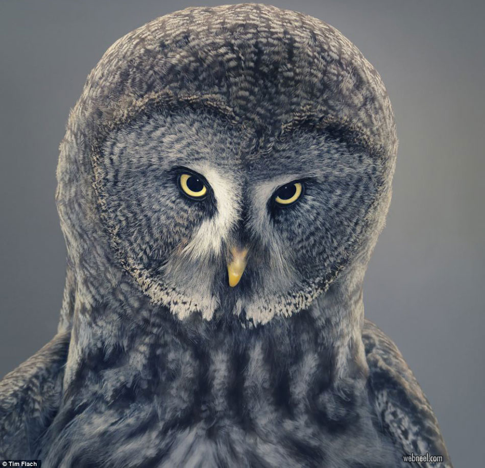 bird photography owl by tim flach