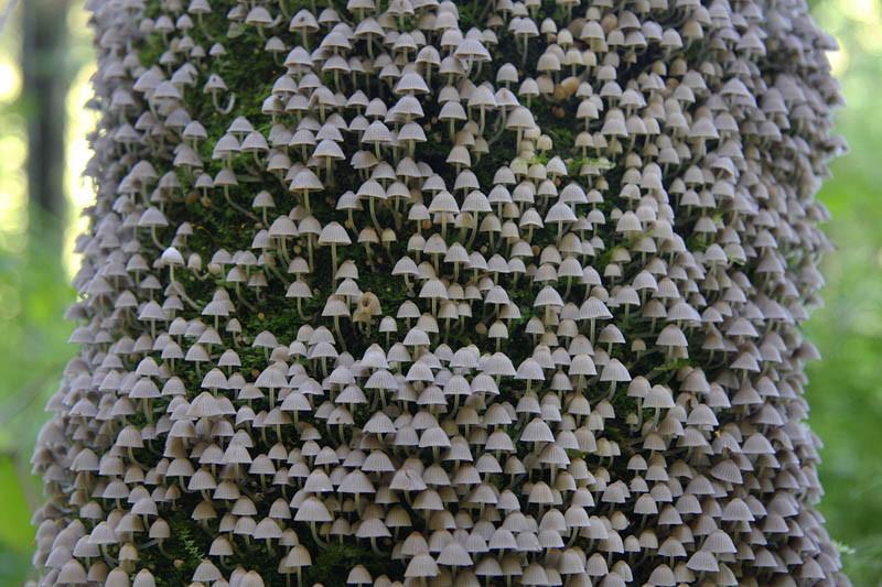 inspiring bell tree