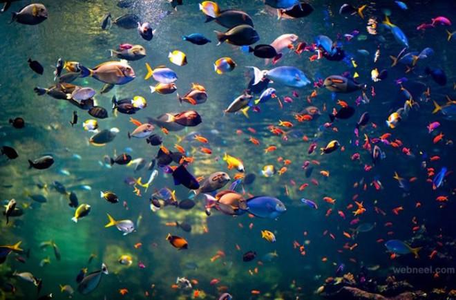 colorful underwater fish