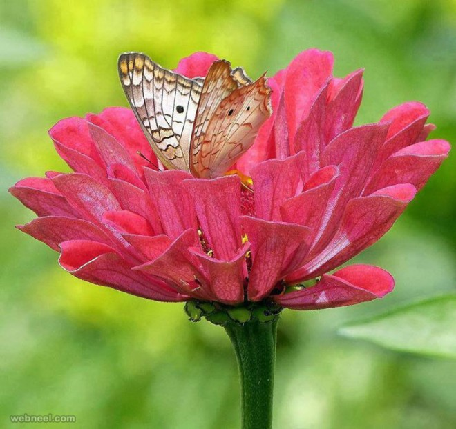 Beautiful Flower Photo With Butterfly By Amazing Pictures