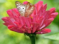beautiful-flower-photo-with-butterfly-by-amazing-pictures