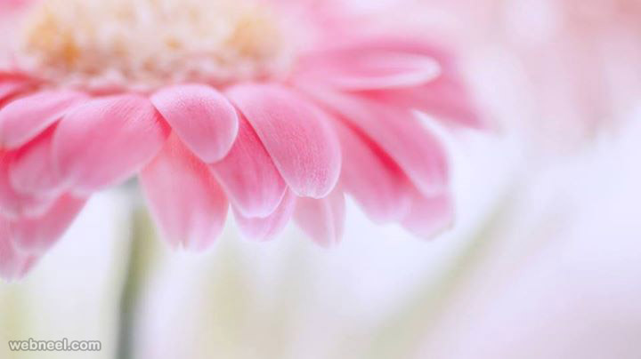 Beautiful flower photography by rehan