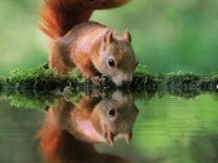 beautiful-squirrel-wildlife-photography-by-arena-animation