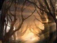 beautiful-trees-tunnel