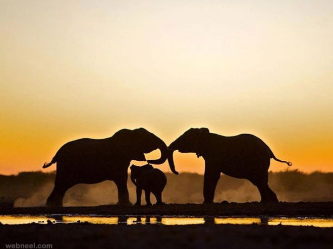 elephants Silhouette photography