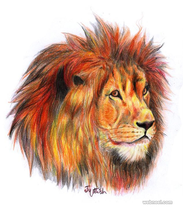 lion color pencil drawing by jyothish kumar