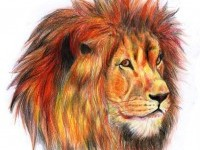 lion-color-pencil-drawing-by-jyothish-kumar