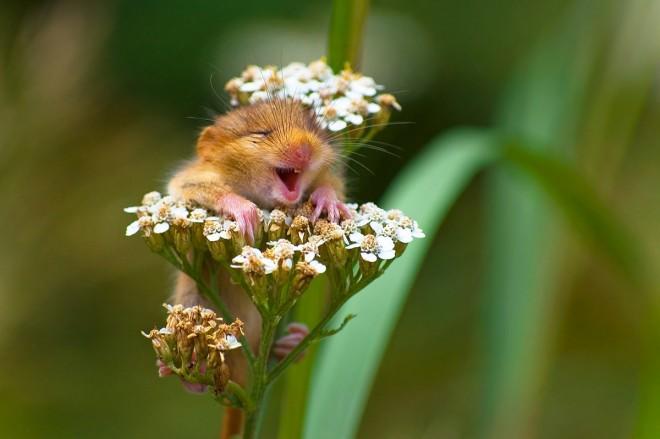 comedy wildlife photographer award by andrea zampatti