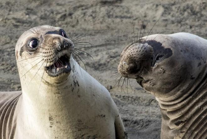 comedy wildlife photographer award by george cathcart