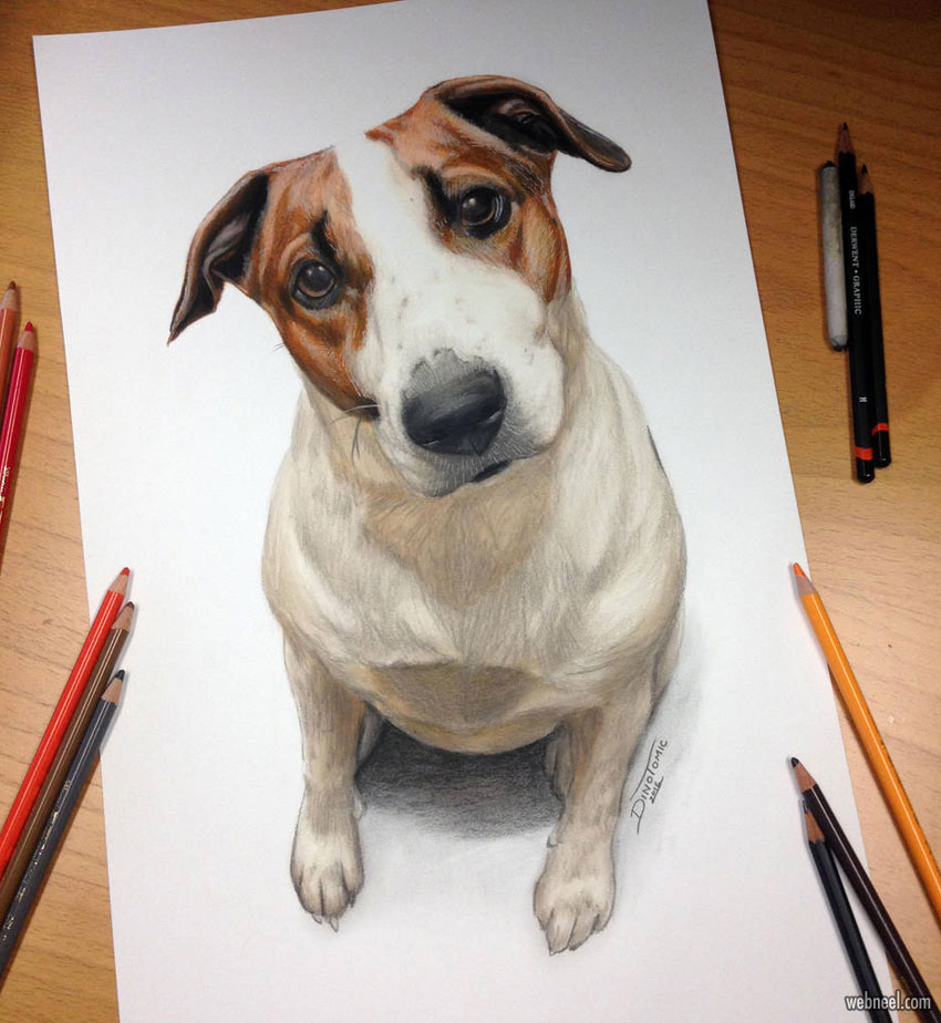 dog color pencil drawing by dino tomic