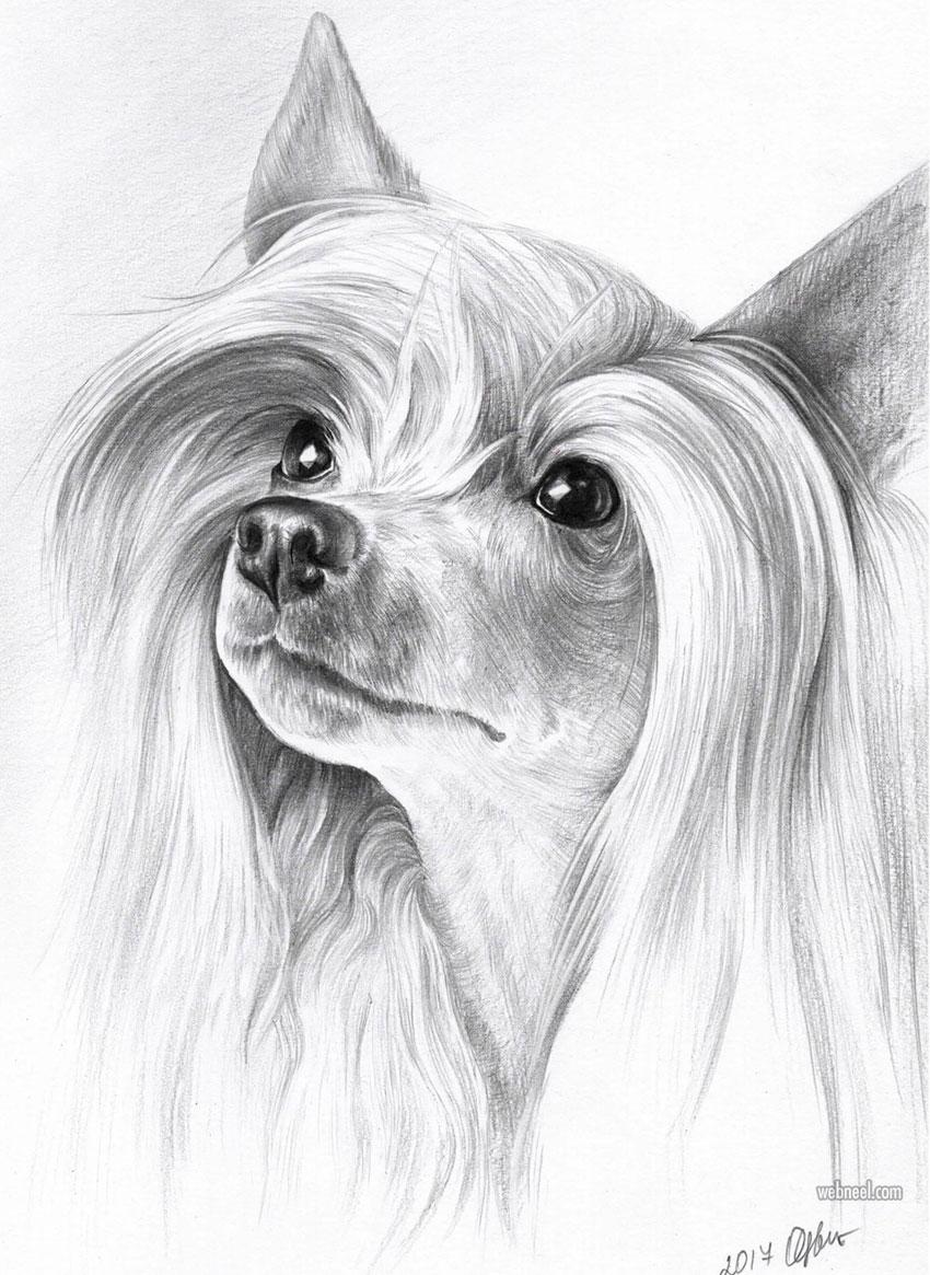 Dog PAPILLON pencil drawing art A20 size by UK artist Pet Portrait ...