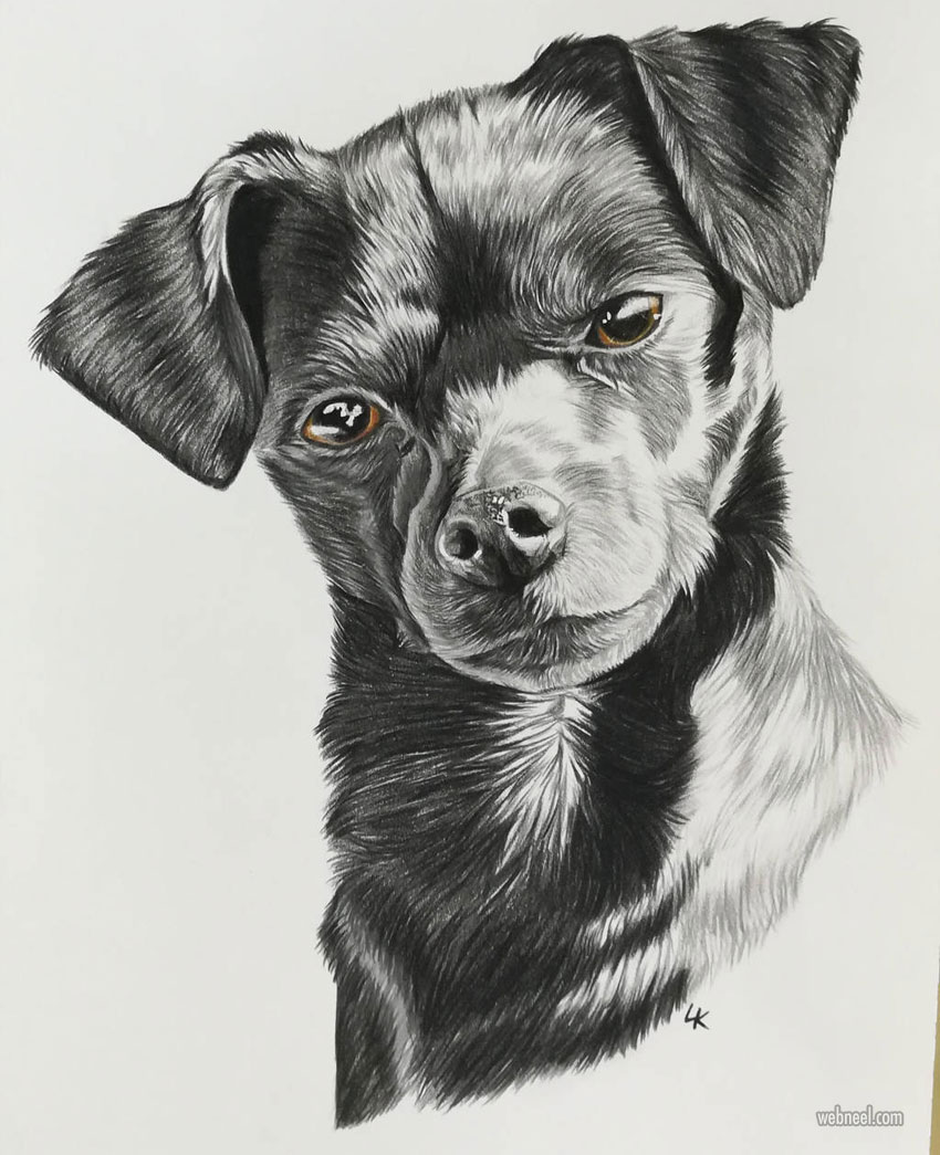dog pencil drawing by redsoulwolf
