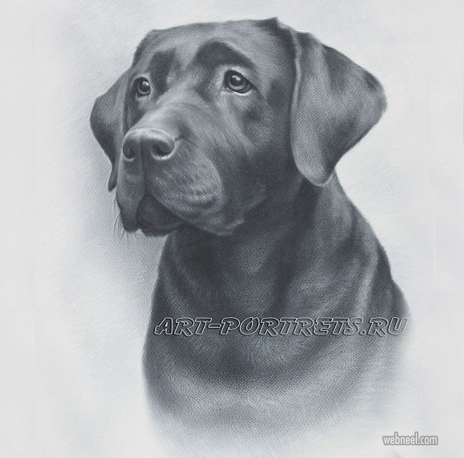 dog drawing by artportrets