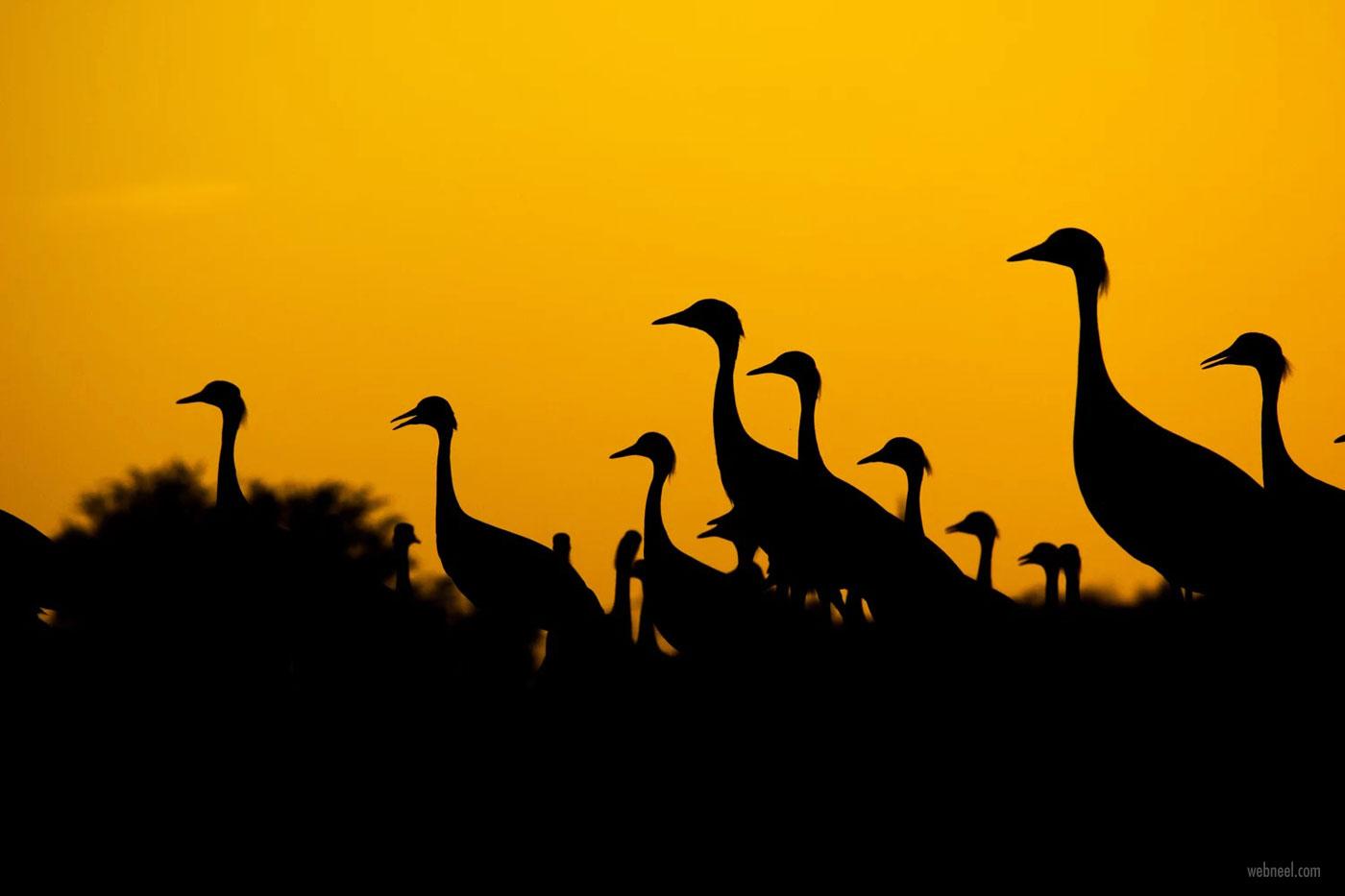 silhouette photography crane