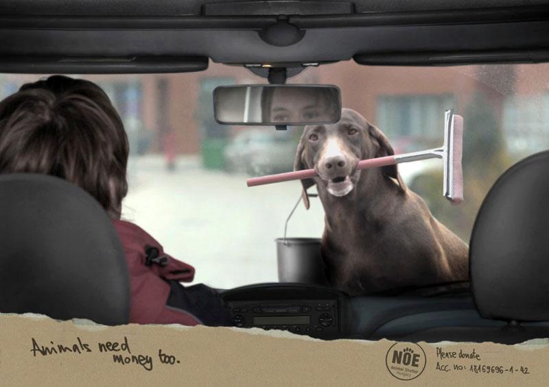 صورة اعلان يحث على التبرع لانقاذ الحيوانات