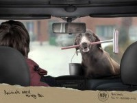 Animal-need-money-to-go-carwash