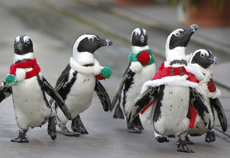 penguins on the march