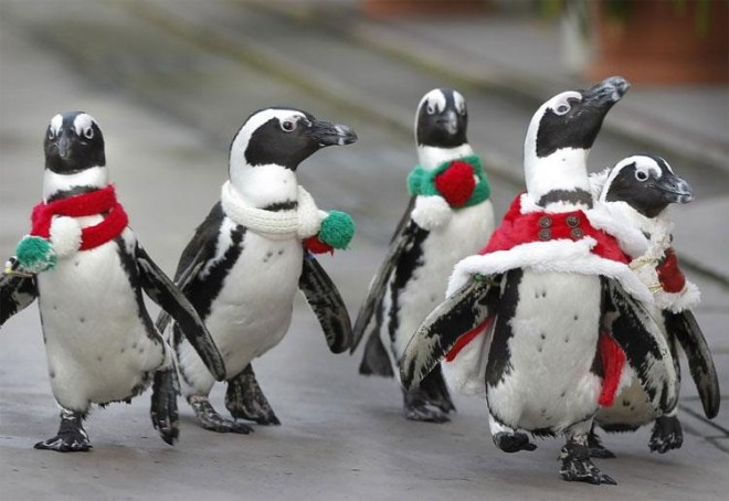 Penguins on the March christmas carol birds imaginative