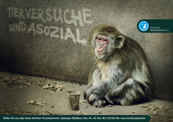 monkey advertisement