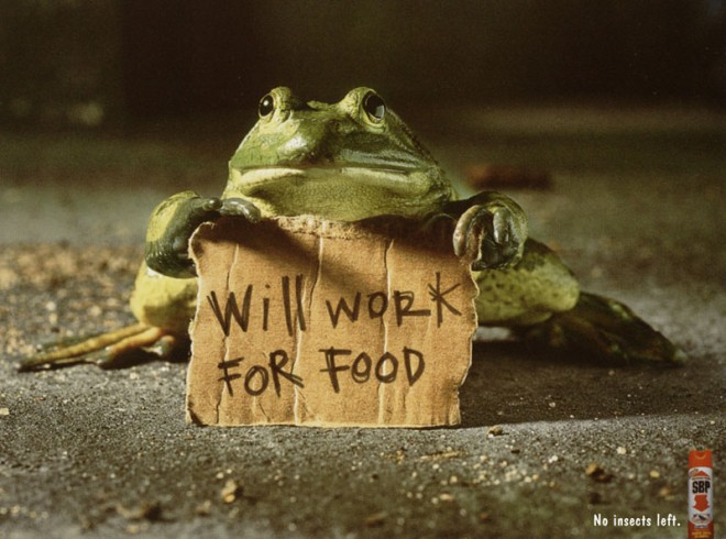 will work for food frog