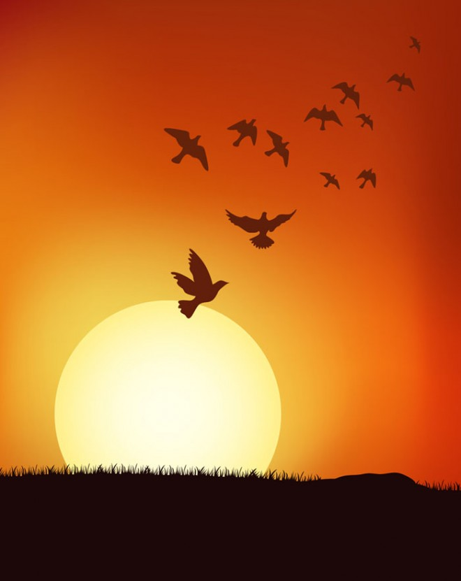 Birds at sunrise Background