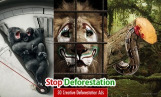 Stop Deforestation - 30 Creative Advertising Ideas and design inspiration