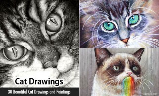 30 Beautiful Cat Drawings - Best Color Pencil Drawings and Paintings - World Cat Day Aug 8