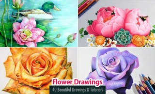 40 Beautiful Flower Drawings and Tutorial Videos for you