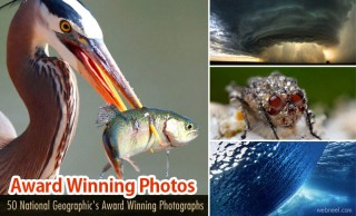 50 National Geographic Photos - Award Winning Photography Examples