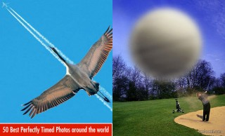 50 Best Perfectly Timed Photos around the world for your inspiration