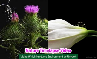 Beautiful Time Lapse Photography video which nurtures environment - Umwelt