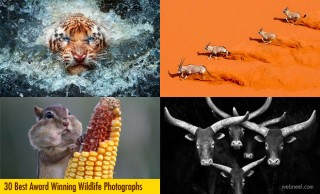30 Best Award Winning Wildlife Photography examples from around the world