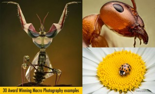 100 Award Winning Macro Photography examples for you