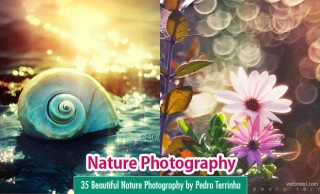 35 Beautiful Nature Photography by Pedro Terrinha - Colorful Showcase