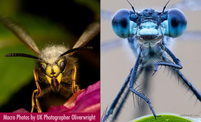 15 Beautiful Macro photography examples by famous UK photographer Oliver Wright