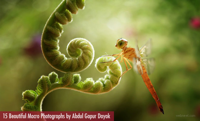 15 Beautiful Macro Photographs by famous Indonesian photographer Abdul Gapur Dayak