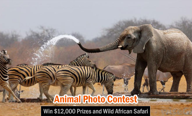 Animal Behaviour Photo Contest 2016 - Win $12,000 | 31 Dec 2016