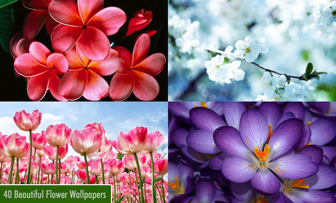 25 Beautiful Flower Wallpapers For Your Desktop Flower