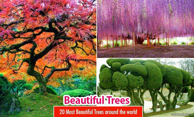 Beautiful Trees