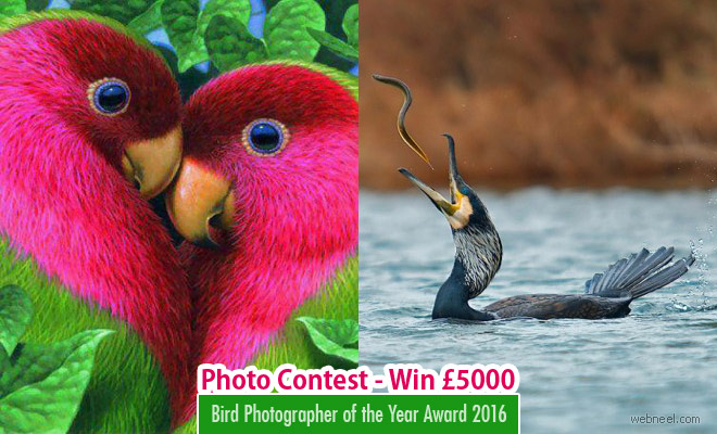 Bird Photographer of the Year Award 2016 - Participate and win £5,000