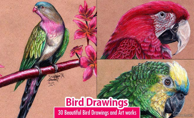 Pretty Bird Drawing Bird Drawings