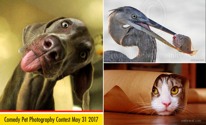 Comedy Pet Photography Competition - May 31 2017