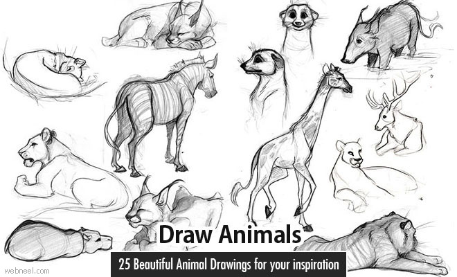 Black and white animal drawings easy for Easy drawing websites